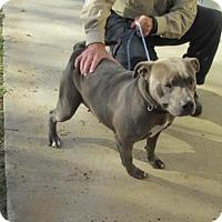 Adopt A Pet :: Zeta - Rocky Mount, NC