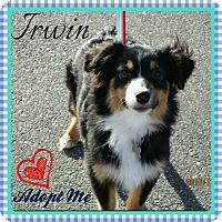 Adopt A Pet :: Irwin - Freeport, NY