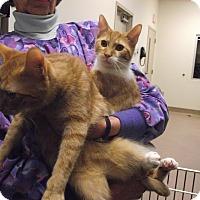 Adopt A Pet :: Ronald 2 - Chambersburg, PA