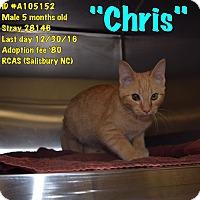Adopt A Pet :: Chris - Salisbury, NC