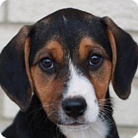Adopt A Pet :: Jacklyn - ADOPTION IN PROGRESS - Cookeville, TN