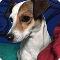 Adopt A Pet :: Clay *LOCAL* - Wakefield, RI