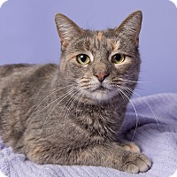 Adopt A Pet :: Dory - Wilmington, DE