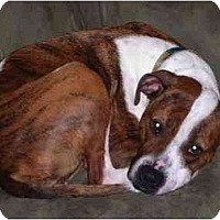 Adopt A Pet :: Charlie - Jackson, MI