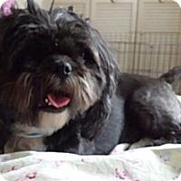Adopt A Pet :: Ulysses - Phoenix, AZ
