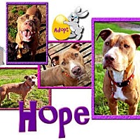 Adopt A Pet :: Hope - Colleyville, TX