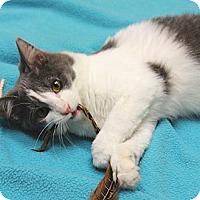 Adopt A Pet :: Fauna - Chicago, IL