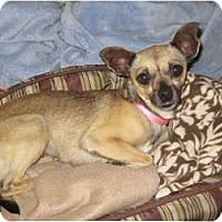 Adopt A Pet :: Sophie - Commerce City, CO