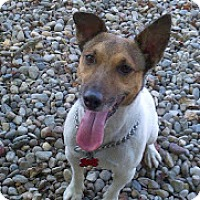 Adopt A Pet :: Milo - Tinton Falls, NJ