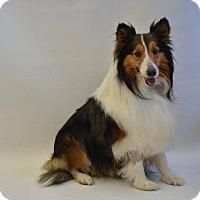 Adopt A Pet :: Buttons - Pueblo West, CO