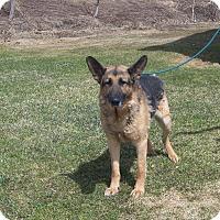Adopt A Pet :: DANNY - Tully, NY