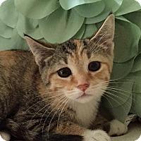 Adopt A Pet :: Gianna - Addison, IL