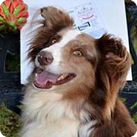 Adopt A Pet :: Annabelle - Peachtree City, GA