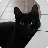 Adopt A Pet :: Simone - Miami Beach, FL