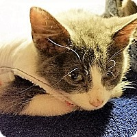 Adopt A Pet :: Jingles~Adoption Pending - Davenport, IA