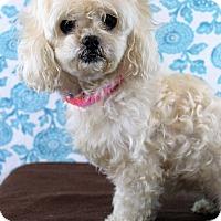 Adopt A Pet :: Portia - Starkville, MS