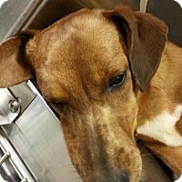 Adopt A Pet :: WINNER - Anderson, SC