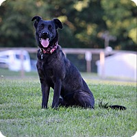 Adopt A Pet :: Lola - Columbia, PA