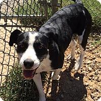Adopt A Pet :: Rhilo - Allentown, PA