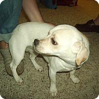 Adopt A Pet :: Marley - Umatilla, FL