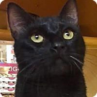 Adopt A Pet :: Rodrigo - LaJolla, CA