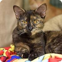 Adopt A Pet :: Filigree - St. Paul, MN