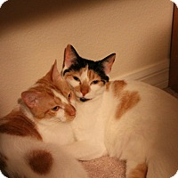Adopt A Pet :: Vanessa - Sarasota, FL