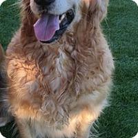 Adopt A Pet :: Toby - Temecula, CA