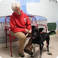 Adopt A Pet :: Jake - Elyria, OH