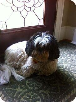 Shih Tzu Dog for adopt...