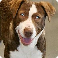 Adopt A Pet :: TJ - Gig Harbor, WA