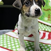 Adopt A Pet :: Storm - Wytheville, VA