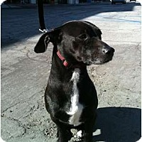 Adopt A Pet :: Mikey - Lake Forest, CA