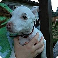 Adopt A Pet :: Casper - Roaring Spring, PA