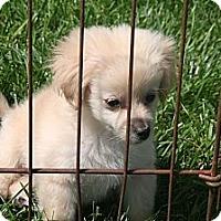 Adopt A Pet :: Tessa - Garden Grove, CA