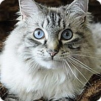 Adopt A Pet :: Chelsea - Columbus, OH