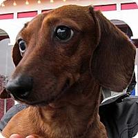 Adopt A Pet :: KENDRA - Portland, OR