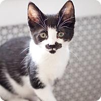 Adopt A Pet :: Morgan - Island Park, NY