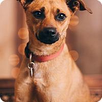 Adopt A Pet :: Montgomery - Portland, OR