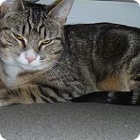 Adopt A Pet :: Kitt Kitt - Hamburg, NY