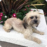 Adopt A Pet :: OZZY - Los Angeles, CA