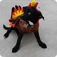 Adopt A Pet :: Miles - Richmond, VA