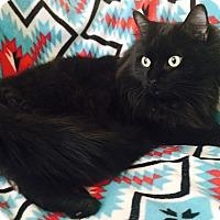 Adopt A Pet :: BJ - Addison, IL