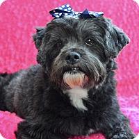 Adopt A Pet :: Peaches - Irvine, CA