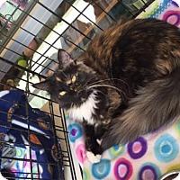 Adopt A Pet :: Carlotta - San Antonio, TX