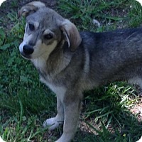 Adopt A Pet :: Aspen - Trenton, NJ
