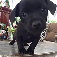 Adopt A Pet :: LEAH - Rancho Cucamonga, CA