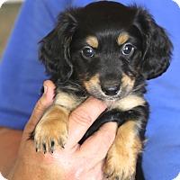 Adopt A Pet :: Earl John Scott~adopted! - Glastonbury, CT