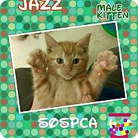 Adopt A Pet :: Jazz - Zanesville, OH