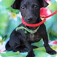 Adopt A Pet :: Amaris - Willows, CA